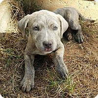 Adopt A Pet :: Emma - Dallas, GA