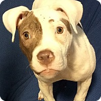 Adopt A Pet :: Charlotte - Conroe, TX