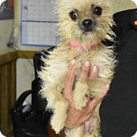 Adopt A Pet :: Gertie - Fort Worth, TX