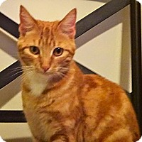 Adopt A Pet :: Kixi - Escondido, CA