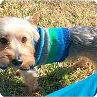 Adopt A Pet :: Maxx - Gulfport, FL
