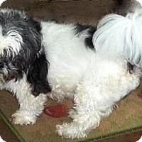 Adopt A Pet :: Winston - Mooy, AL