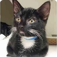 Adopt A Pet :: Aries - Maywood, NJ