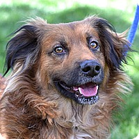 Adopt A Pet :: Casey - Springfield, IL