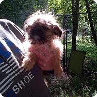 Adopt A Pet :: Bart - Antioch, IL