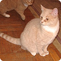 Adopt A Pet :: Pinky -Discounted Adoption Fee - Colmar, PA