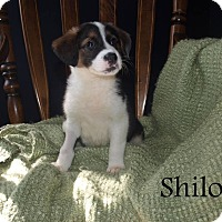 Adopt A Pet :: Shiloh - Southington, CT
