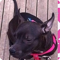 Labrador Retriever Mix Dog for adoption in Birmingham, Michigan - PRINCESS