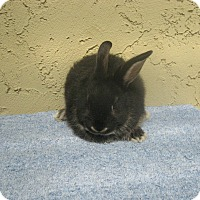 Adopt A Pet :: Baby2 - Bonita, CA