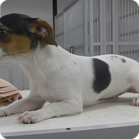 Adopt A Pet :: Patches - Manning, SC