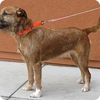 Adopt A Pet :: Amy (Sweet and Active) - Santa Monica, CA