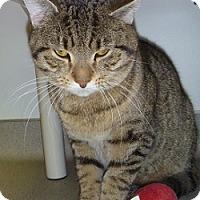 Adopt A Pet :: Simba - Hamburg, NY