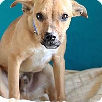 Adopt A Pet :: Bart - Waldorf, MD