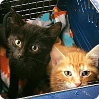 Adopt A Pet :: Citrus - Chicago, IL