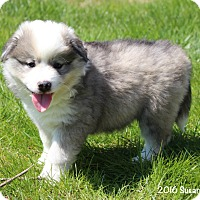 Adopt A Pet :: Jodie - Bedford, VA