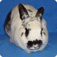 Adopt A Pet :: Bits - Woburn, MA
