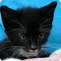 Adopt A Pet :: Ho Ho - Colonial Heights, VA