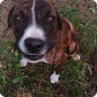 Adopt A Pet :: Maddie - Kendall, NY
