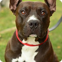 Adopt A Pet :: Coach - tucson, AZ