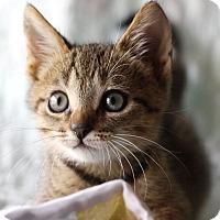 Adopt A Pet :: Spike - Mayflower, AR
