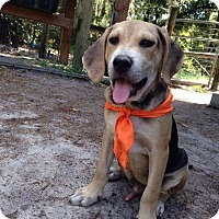 Adopt A Pet :: Star - Groveland, FL