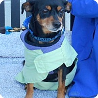 Adopt A Pet :: Emme - Ashland, VA