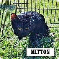 Adopt A Pet :: Mitten Man (arriving 10/28) - Manchester, CT