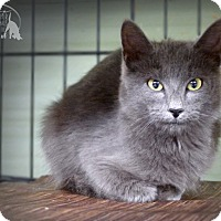 Adopt A Pet :: Gloria - Marlinton, WV