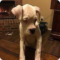 Adopt A Pet :: Borla - Hurst, TX