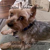 Adopt A Pet :: Beau - The Village, FL