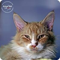 Adopt A Pet :: Rembrandt - Lyons, NY