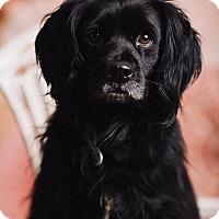 Adopt A Pet :: Tiberius - Portland, OR