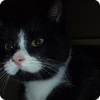 Adopt A Pet :: Roxie - Hamburg, NY