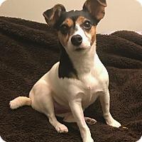 Adopt A Pet :: Pinkie - New York, NY