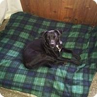 Adopt A Pet :: Frankie - Valley Village, CA
