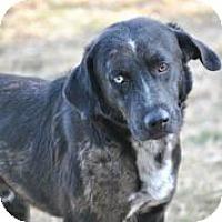 Adopt A Pet :: Steele - Austin, TX