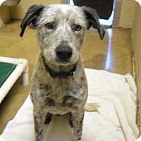 Adopt A Pet :: Rex - Wickenburg, AZ