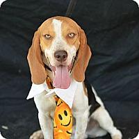 Adopt A Pet :: Barney - Plano, TX