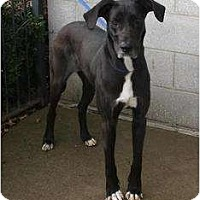 Adopt A Pet :: ShelliePENDING - Toronto/Etobicoke/GTA, ON