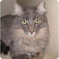 Adopt A Pet :: Silver - Mesa, AZ