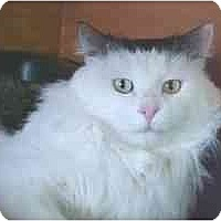 Adopt A Pet :: Eddy - Lunenburg, MA
