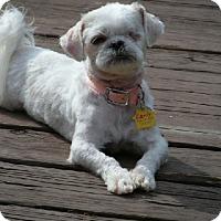 Adopt A Pet :: Carly - LEXINGTON, KY