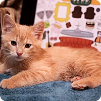 Adopt A Pet :: Gunther - Plymouth, MN