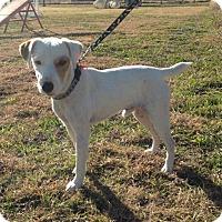 Adopt A Pet :: Skipper in Dallas - Dallas/Ft. Worth, TX