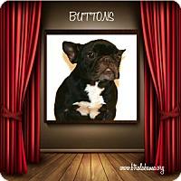 Adopt A Pet :: Buttons - Alabaster, AL