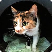 Adopt A Pet :: Patience - Battle Creek, MI