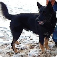 Adopt A Pet :: Zeus(85 lb) SMART!!! - Sussex, NJ
