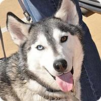 Adopt A Pet :: Casper-Foster Needed! - Carrollton, TX