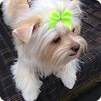 Adopt A Pet :: Murphy - Bellbrook, OH