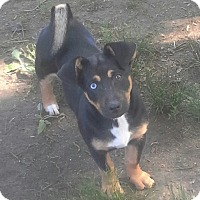 Adopt A Pet :: JUNO - Bedminster, NJ